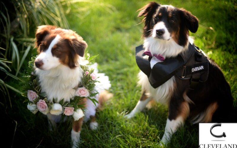 Ahern banquet Center wedding  in Avon lake Ohiofor Cindy & Jeff